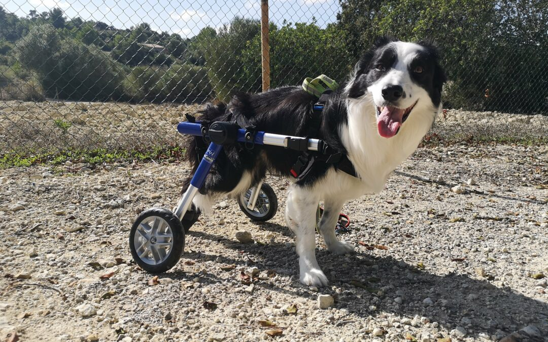 Adiós a la discapacidad, hola al superpoder.