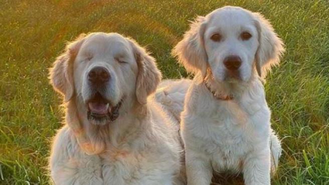 ¿Cómo saber si tu perro se está quedando o es ciego?